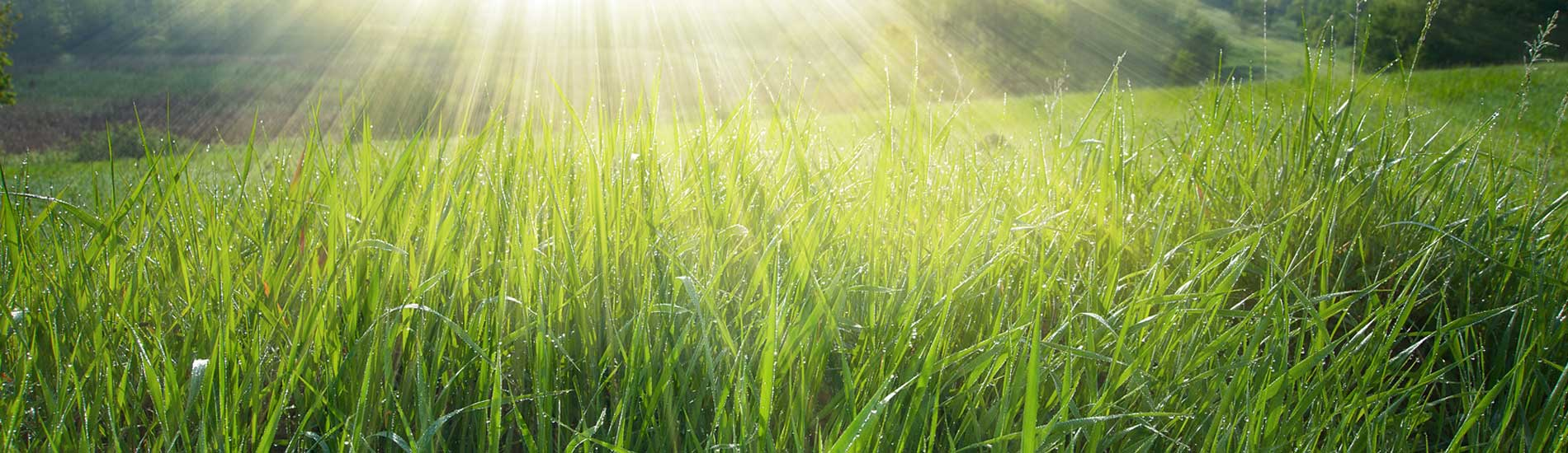 Grass in sunlight
