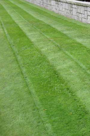 Lawn with cut grass