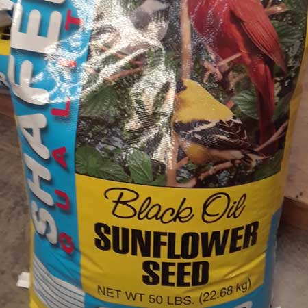 Sunflower Seed for Birds